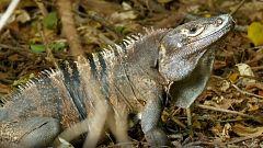 Planeta selva - Las junglas de la sed. Bosque americano