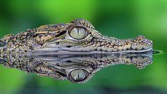 Animales al natural - Cocodrilos