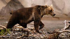 Somos documentales - Rusia salvaje: el reino de los osos y los volcanes