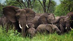 Animales al natural - Elefantes