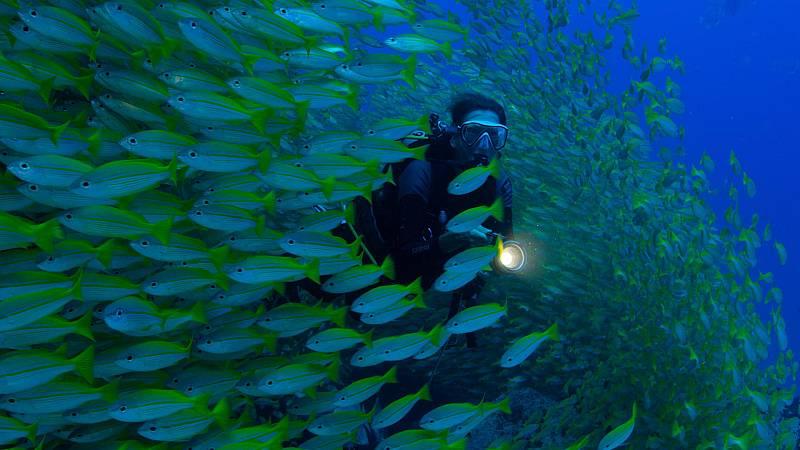 Somos documentales - Planeta perpétuo. Héroes de los océanos - ver ahora