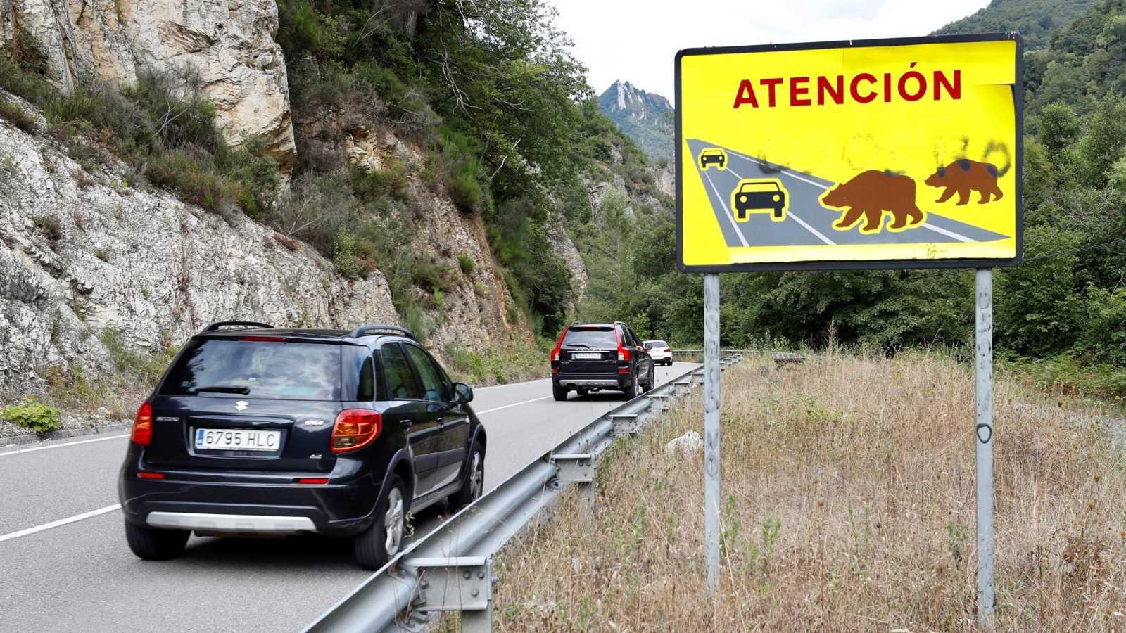 """El presidente de la Fundación Oso Pardo dice que el ataque ocurrido en Asturias """"es algo excepcional"""""""