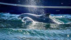 España Directo - Evelyn Segura: el avistamiento de cetáceos en el litoral catalán