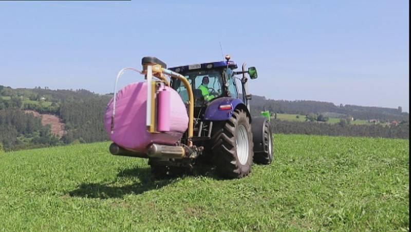 El plástico de color rosa se abre paso en los campos de Cantabria