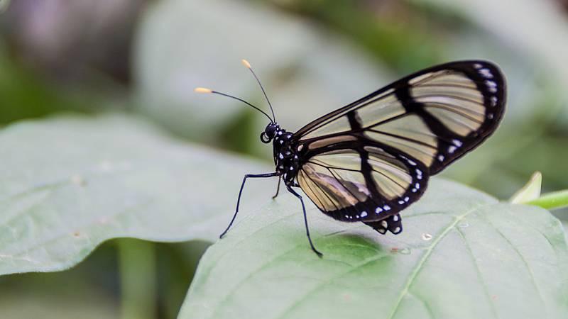 Aquí la Tierra - Iturriaga nos enseña las curiosidades de las mariposas