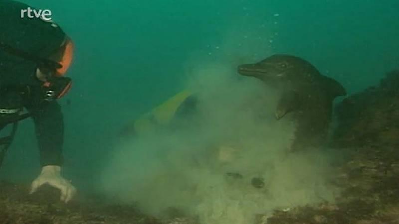 Arxiu TVE Catalunya - Teledues - Reinstal·lació del dofí de les Medes