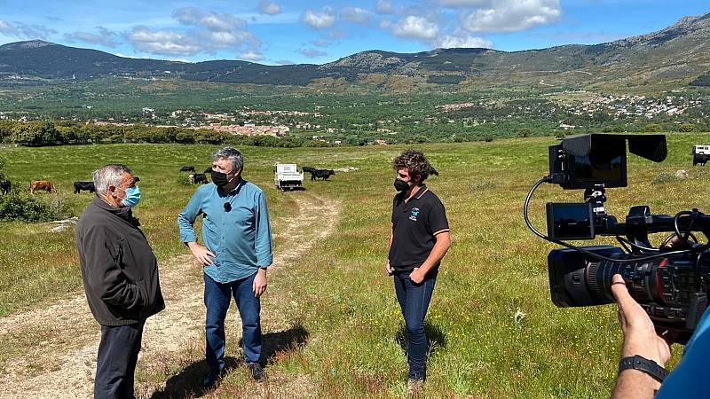 Aquí la Tierra - Ramón Arangüena conoce a las vacas bomberas de Guadarrama