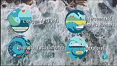 El Temps - L'oceà: vida i mitjà de subsistència