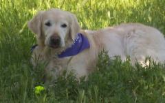 En Lengua de Signos - Clases accesibles de educación canina