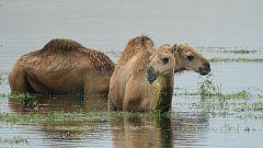 Infierno arábigo - Cuando vienen las lluvias