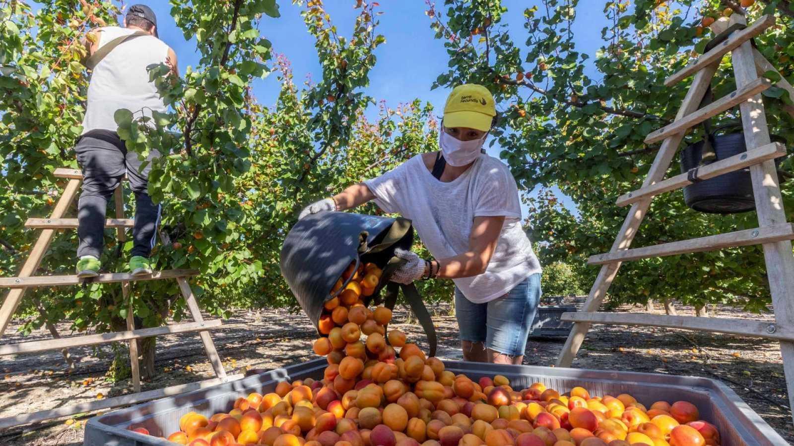 La subida del salario mínimo a 900 euros lastró la creación de empleo, según el Banco de España