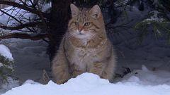 Somos documentales - Pequeños felinos, grandes personalidades