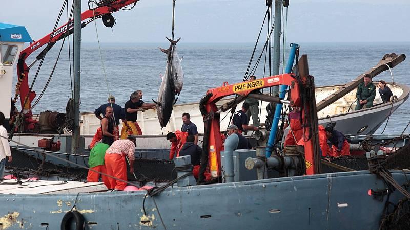 Pesca sostenible, ronqueo y ultracongelación: los secretos de Cádiz para tener atún rojo todo el año