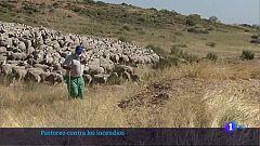 El ganado ovino también ayuda a  prevenir incendios