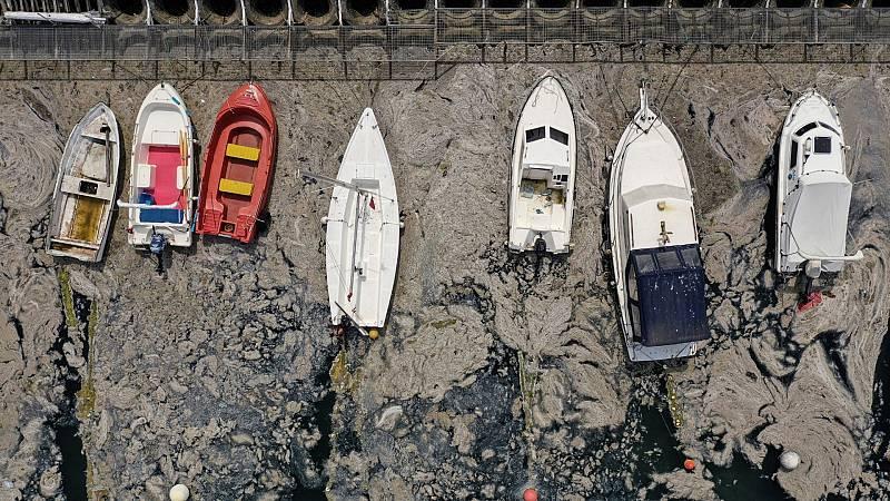 El moco marino se extiende por la costa de Estambul