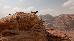 Infierno arábigo - Vida y muerte en las dunas