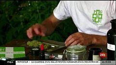 Parlamento - El reportaje - Más debates sobre los usos del cannabis - 12/06/2021
