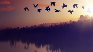 El planeta de las aves