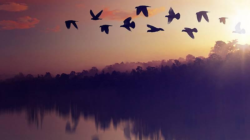 Somos documentales - El planeta de las aves - ver ahora