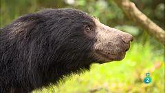 Grans Documentals - Sense temps per la mandra: Els óssos morruts de Sri Lanka