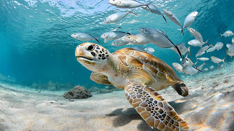 Aquí la Tierra - Asistimos a la puesta en libertad de tortugas marinas en Valencia