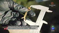España Directo - Descubrimos el tritón de Montseny junto a Evelyn Segura