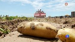 Aquí la Tierra - Las papas de arena de playa de Sanlúcar de Barrameda