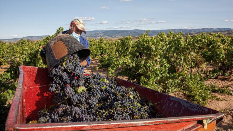 EE.UU. y la UE suspenden los aranceles al vino o al aceite español