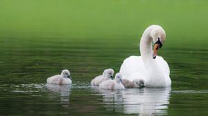 El lago de los cisnes de China