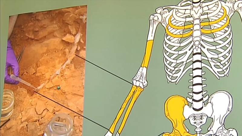 Hallan restos óseos de una mujer del paleolítico, una Homo Sapiens que vivió hace 14.000 años, en una cueva en Lleida