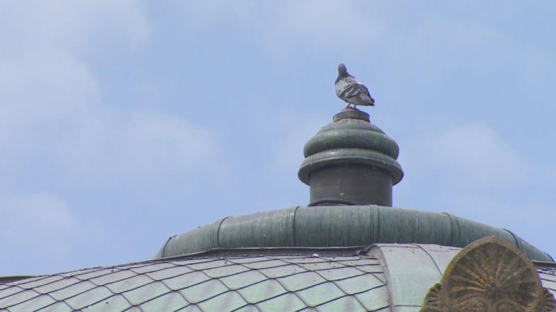 Plaga de palomas en Pamplona.
