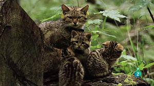 Petits felins, grans personalitats