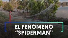 Una inmensa tela de araña en varios campos de Australia