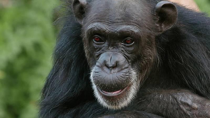 Planeta selva - La jungla oscura. Selvas africanas - ver ahora