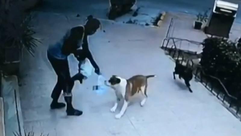 Una niña de 2 años, herida tras sufrir el ataque de un perro en Ceutí, Murcia