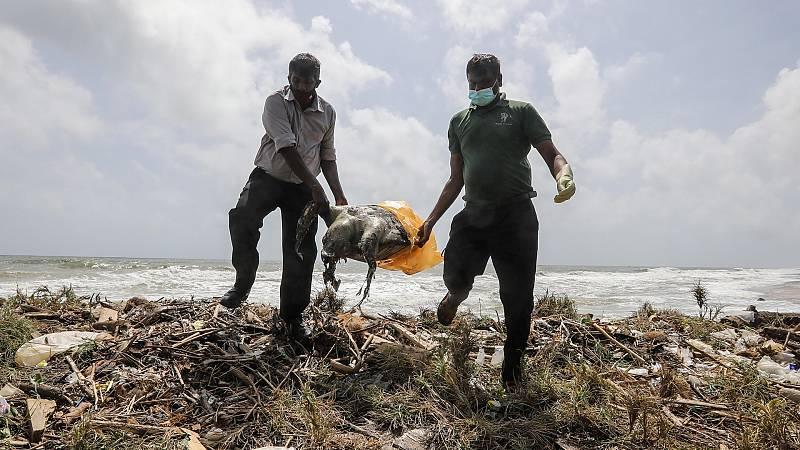 Ecocidio: la destrucción masiva de ecosistemas