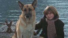 Mañanas de cine - La llamada del lobo