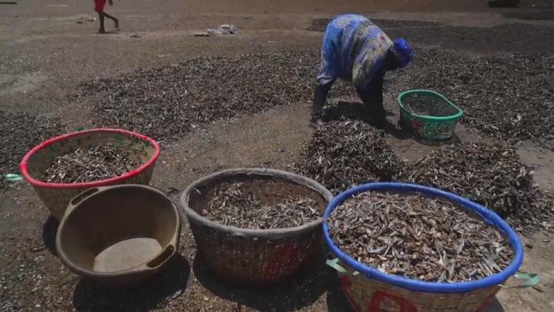 Las procesadoras de pescado de Senegal: mujeres resilientes