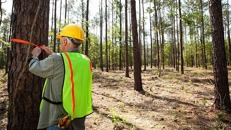 Las elevadas temperaturas acentúan el riesgo de incendios forestales