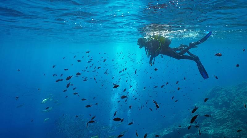 España Directo - Nos sumergimos en la reserva marina de Cabo Tiñoso, ¿te vienes?