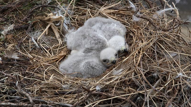 Aquí la Tierra - Conocemos a los nuevos miembros de la familia del Hospital Fauna Salvaje Grefa