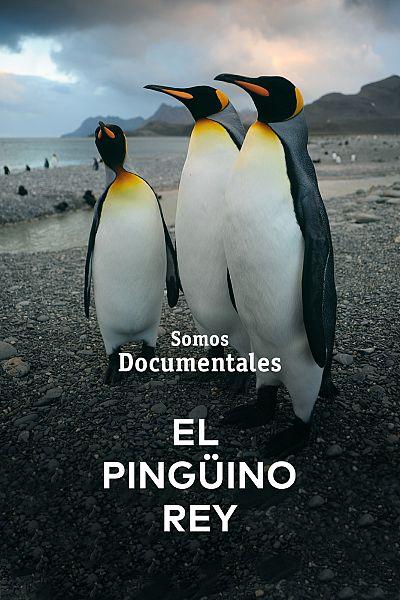 El pingüino rey