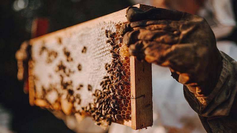 Aquí la Tierra - Misión 'Rescate de la Colmena': nos enseñan cómo mover colmenas de la ciudad al campo