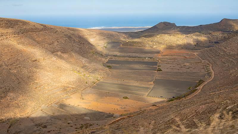 Aquí la Tierra - ¿Es posible cultivar en tierra volcánica? Nos lo demuestran en Lanzarote
