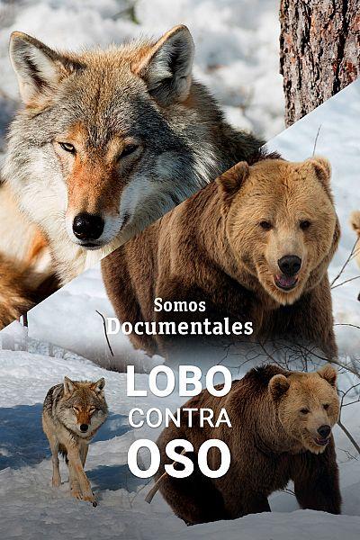 Lobo contra oso