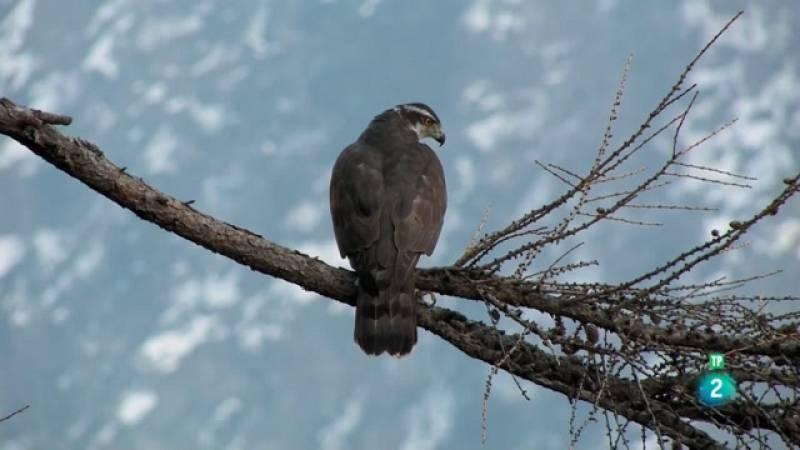 Grans Documentals - Itàlia salvatge. Dues àguiles - Veure ara