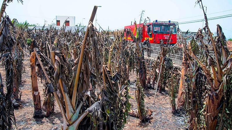 """La lava arrasa con los cultivos de plátano en La Palma: """"Ya hay daños porque la zona está sin accesos y hay riego afectado"""""""