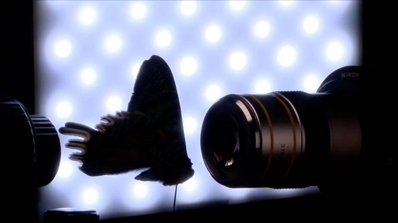 Cámara abierta - Plantagrammers y la fotomicrografía de Ángel Navarro - ver ahora