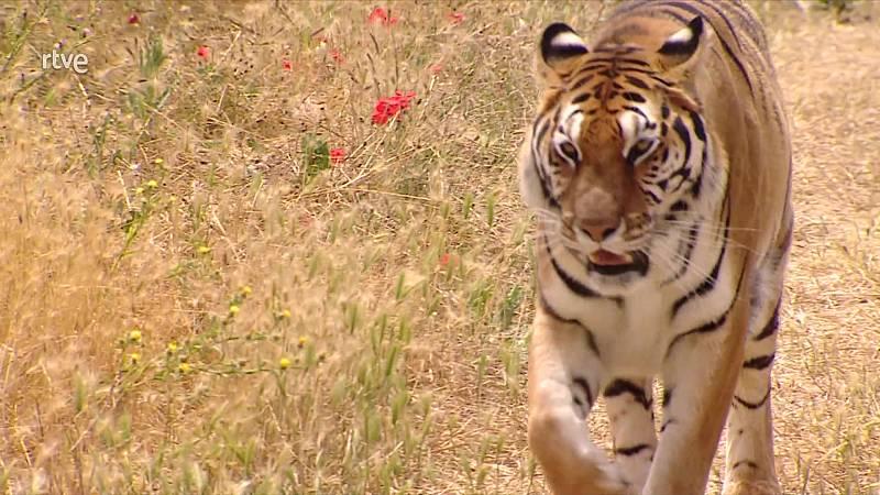 Informe Semanal - Animales de película - ver ahora