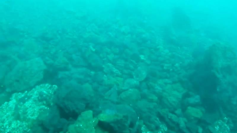 Las primeras imágenes submarinas de la fajana en La Palma revelan que la vida continúa bajo el agua